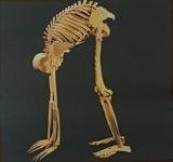 Bouwplaat menselijk skelet_3